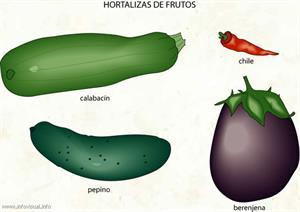 Hortaliza (Diccionario visual)