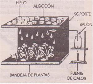 Experimentos Caseros de Ciencias Naturales: Lluvias Ácidas y Contaminación Atmosférica