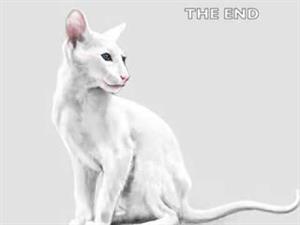 Dibujando un gato oriental paso a paso