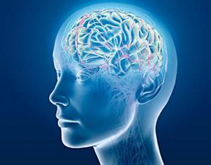 El cerebro no busca la verdad sino sobrevivir (Redes)