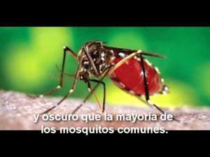 Dengue: Saber para prevenir