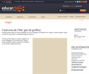 Carnívoros de Chile: gato de geoffroy (Educarchile)
