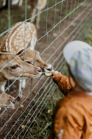 Alimentación de animales.  Experimento de Medio Ambiente para niños de 4 a 7 años