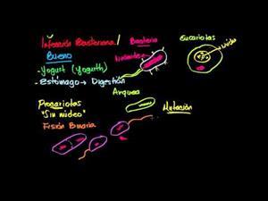Bacterias (Khan Academy Español)