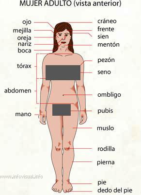 Adulto (Diccionario visual)
