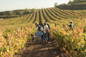 Entre Viñedos, Vincana + Picnic en Bodegas David Moreno