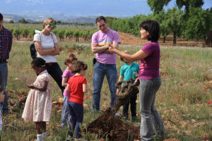 Have you ever chopped a vine? Come with your family or friends and learn how to master this task in Fuenmayor!
