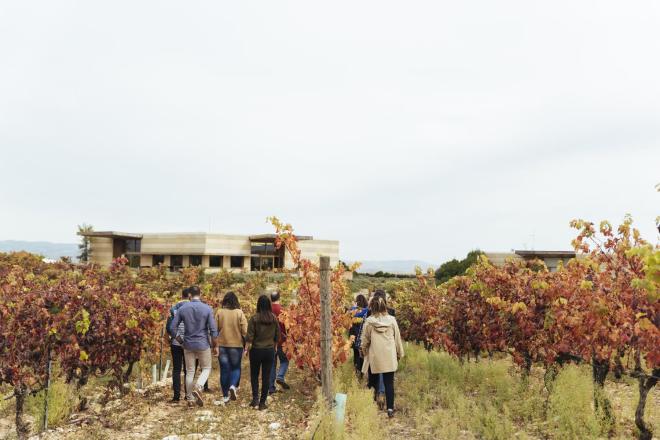 Vineyard and biodiversity