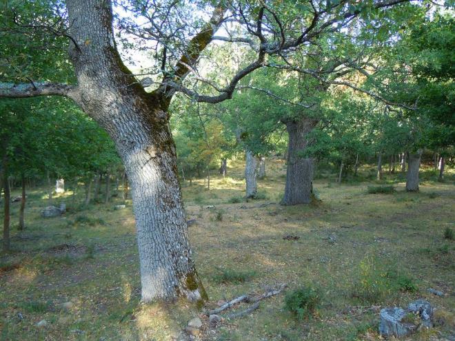 Etapa 6, Laguna de Cameros - San Román de Cameros