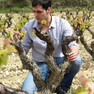 Spring in the vine cycle