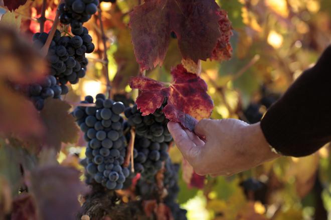 Curso de iniciación a la cata de vinos