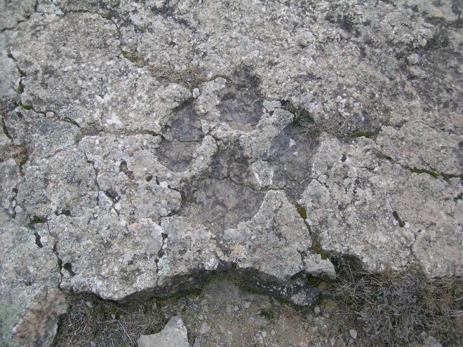 Yacimientos de icnitas de Munilla