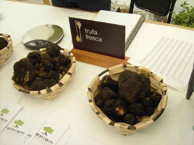 XV Feria de la Trufa en La Rioja