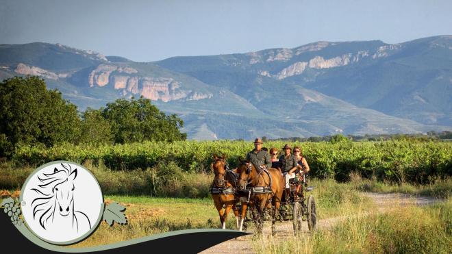 Paseos en carruajes por los viñedos en otoño