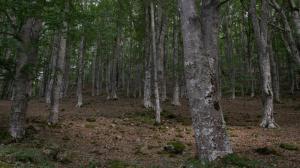 Rutas del Silencio de la Reserva de la Biosfera. Ruta de Santa Engracia del Jubera