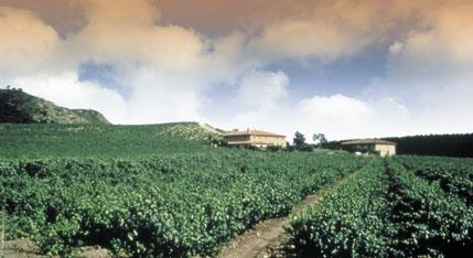 Curso de cata en Consejo Regulador DOCa Rioja