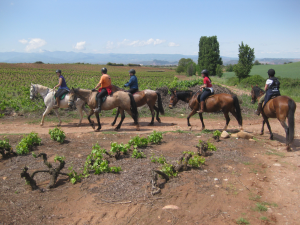 Rutas guiadas a caballo por caminos entre viñas