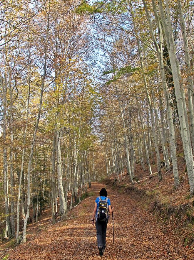 Los colores del otoño en La Rioja