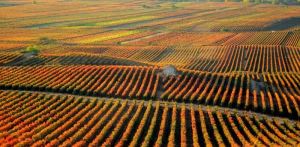 El Gobierno de La Rioja invertirá 50 millones de euros de fondos Next Generation en el despliegue turístico de Enorregión y Valle de la Lengua
