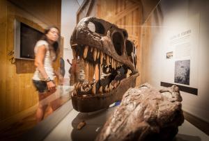 Visita el Museo Cretácico y los yacimientos de icnitas del Barranco Perdido