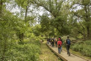 'El bosque mágico que cuenta historias' Visita familiar guiada en la Reserva Natural de los Sotos de Alfaroa