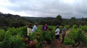 Viñedos singulares en Bodegas Ojuel – El supurao de Rioja