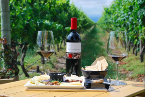Verano entre viñas