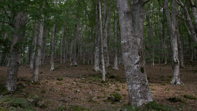 Rutas del Silencio de la Reserva de la Biosfera. Ruta de Trevijano