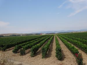 Descubre la Viticultura Ecológica