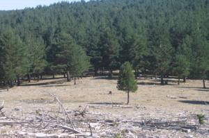 Senderos P.N. Sierra de Cebollera