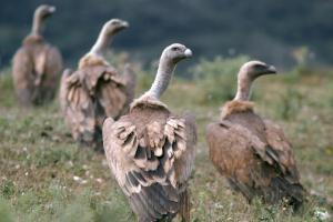 Flora und Fauna der Vogelschutzgebiete