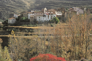 Peroblasco