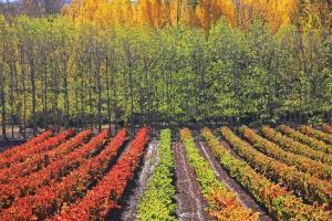 Incentivos en La Tierra con Nombre de Vino