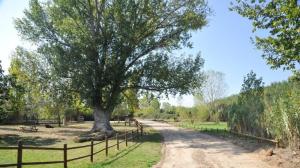 Paseos guiados: Sotos del Ebro de Alfaro