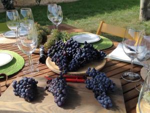 Cata de uvas, La radiografía del vino