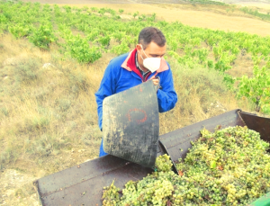 De la viña a la copa en Bodegas Urbina
