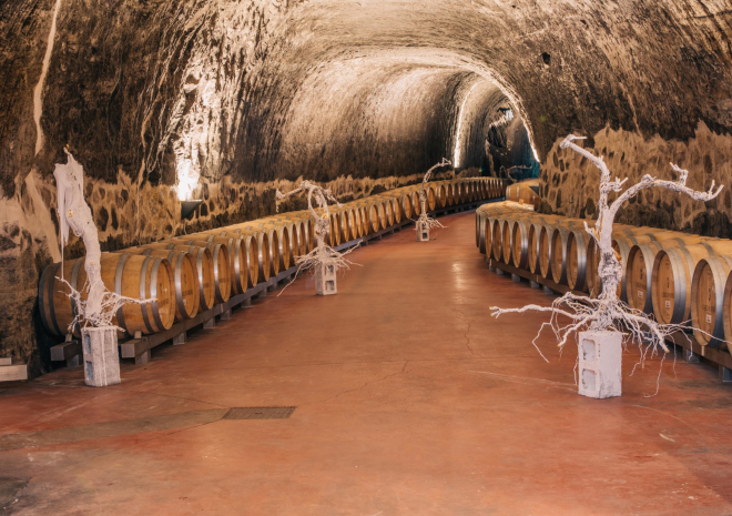 Viñedos & Vinos Premium en San Vicente