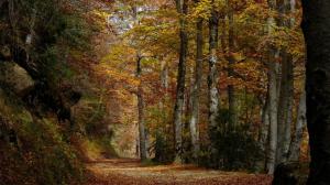 """Paseo guiado """"Los altos bosques del Iregua"""""""