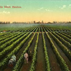Un viñedo Mendoza