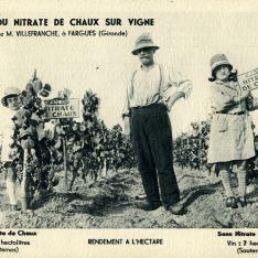 Nitrato de Chaux