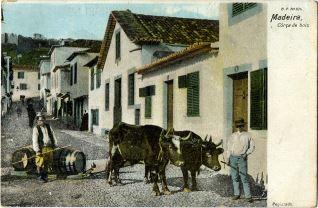 Madeira - Corça de bois