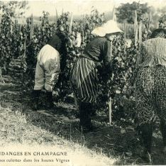 Vendimias en Champagne