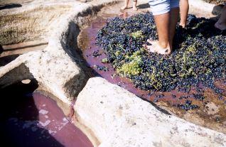 Pisado de uva Ábalos