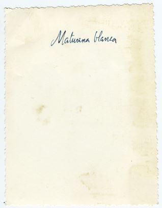 Maturana blanca