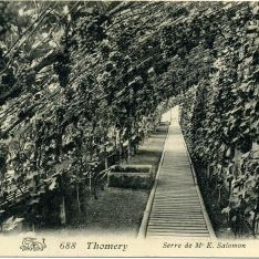 Thomery - Serre de Mr E.Salomon
