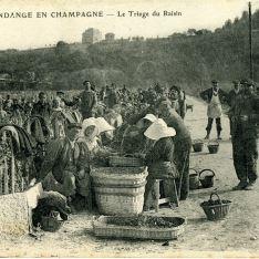 Vendimia en Champagne