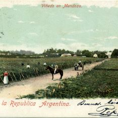 Viñedo en Mendoza