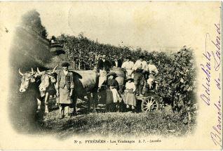 Vendimias en los Pirineos