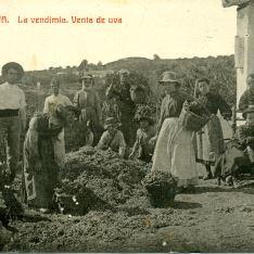 Vendimias en Huelva