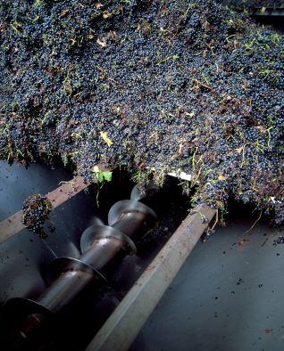 Tolva de recepción de la uva